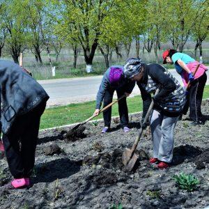 На всей территории села Копчак посажено более тысячи роз и благоустроены цветочные клумбы