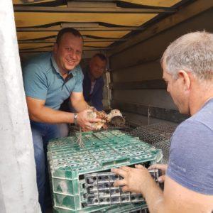 Охотники с. Копчак закупили специальную партию фазанов из Венгрии выпустив их на волю в разных уголках села