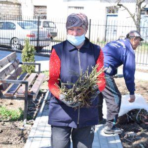 Разбиты цветочные клумбы, посажены розы и 300 саженцев винограда в Социальном центре поддержи населения