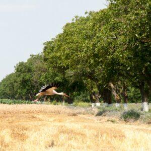 В селе Копчак будет посажено 15 га лесонасаждений