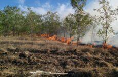 В воскресенье, 13 сентября возник пожар лесонасаждений на восточной окраине села Копчак