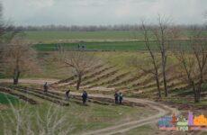 (VIDEO)Завершена посадка  более 10 га лесополосы, по программе UCIP-IFAD