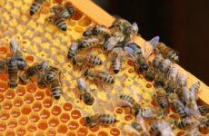 Внимание! Пчеловод! Обработка пестицидами!