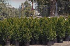 Озеленение парковой зоны бюветов